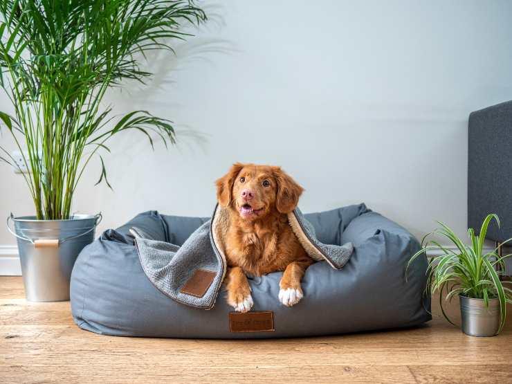 L'infiammazione nel cane