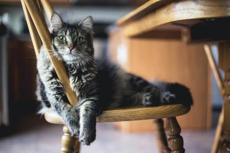 Il gatto e gli integratori giusti
