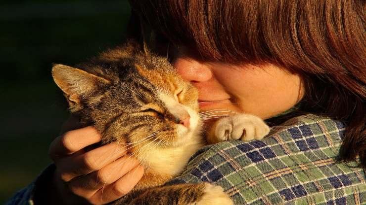 I gatti dimenticano le persone