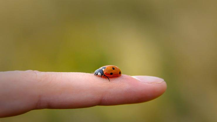 La paura degli insetti nei bambini