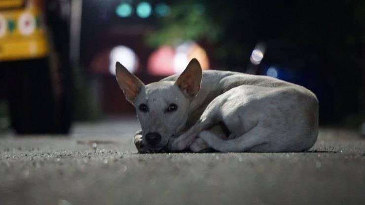 finge non conoscere cane abbandonarlo