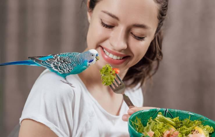 pappagallo mangia verdure
