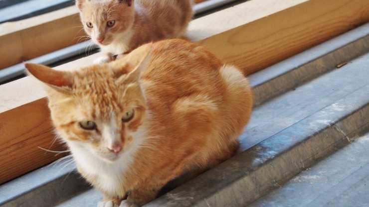 perche gatto si accovaccia