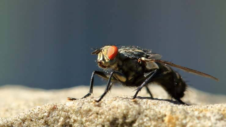 perché mosche posano persone
