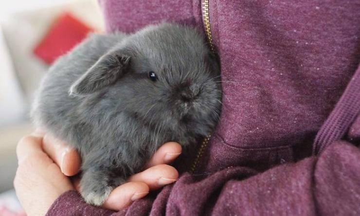 perché scegliere coniglio nano