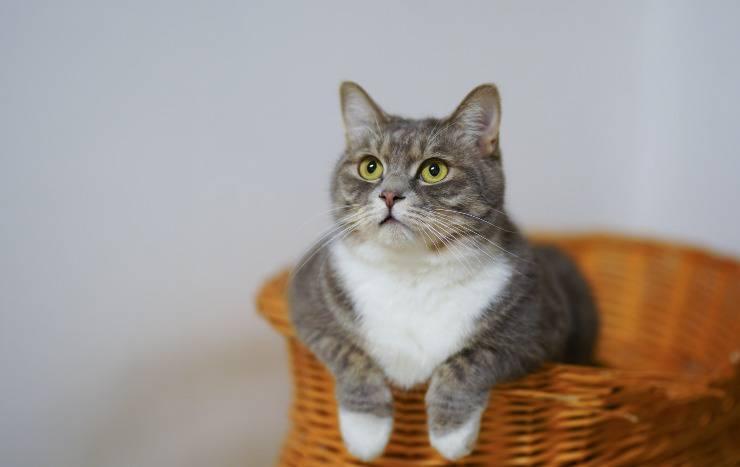 Integratori naturali per il gatto
