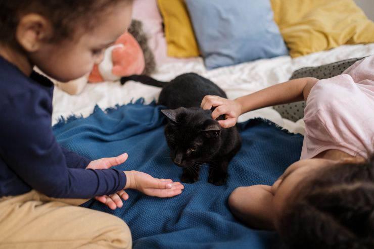 Il morso del gatto mentre gioca