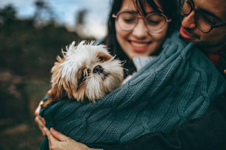 Razze di cani che preferiscono gli umani