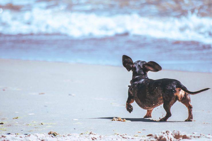 Cani che hanno difficoltà a nuotare