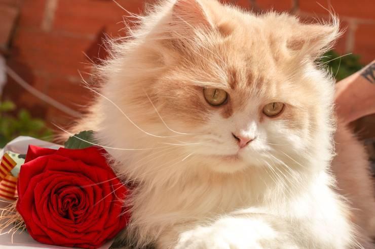 Il felino e la sua cura