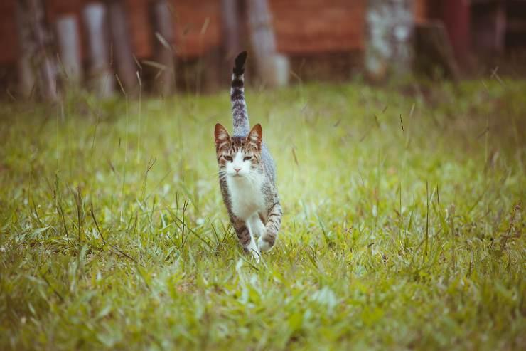 Razze di gatti cacciatori di topi