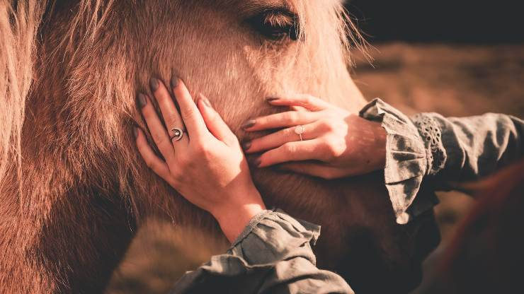 La cura del manto dell'equino