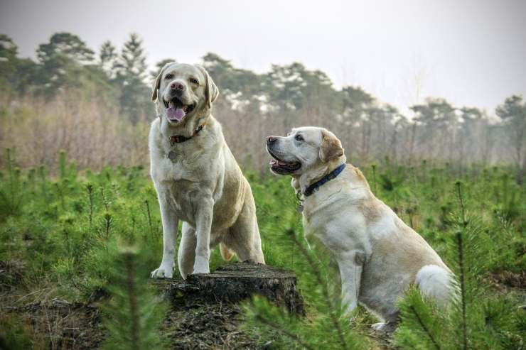 La sicurezza nei cani