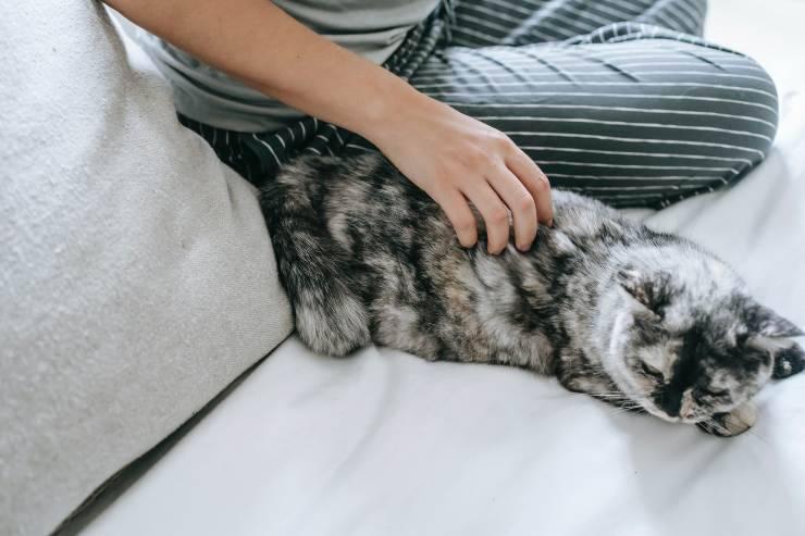 L'affetto del gatto