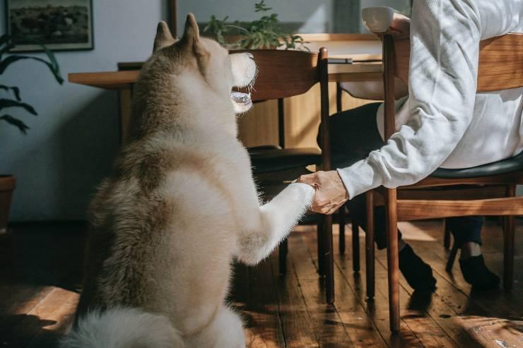 Cani che amano gli umani