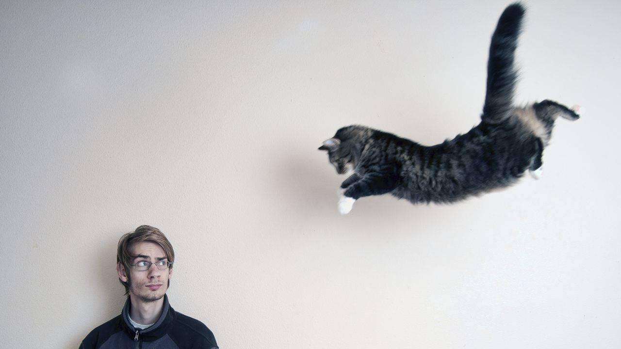 quanto può saltare gatto