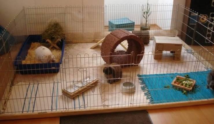 recinto per coniglio nano