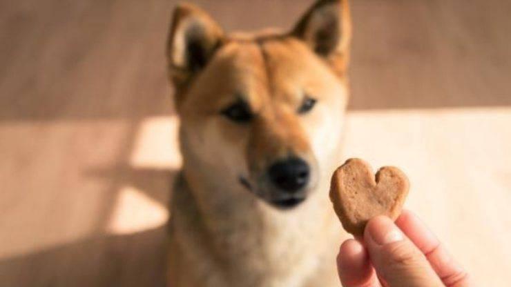 ricetta biscotti al pollo per Fido