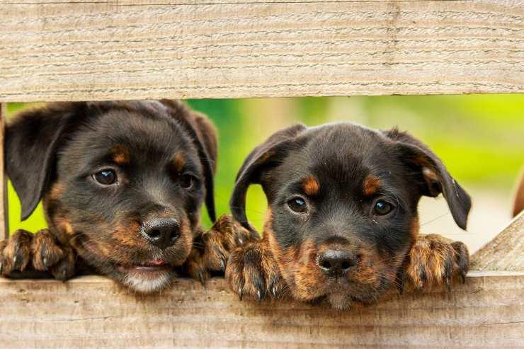 Cani curiosi (Foto Pixabay)