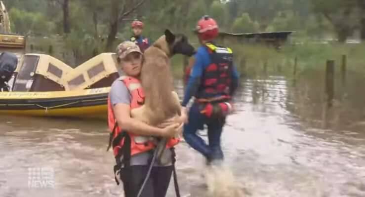 Salvataggio animali dopo l'alluvione