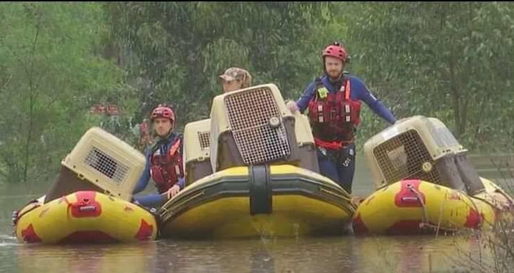 Salvataggio animali dopo l'alluvione (Screen Video )