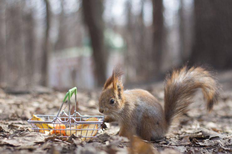 scoiattolo e carote