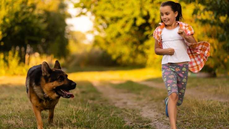 cani sincronizzano comportamento