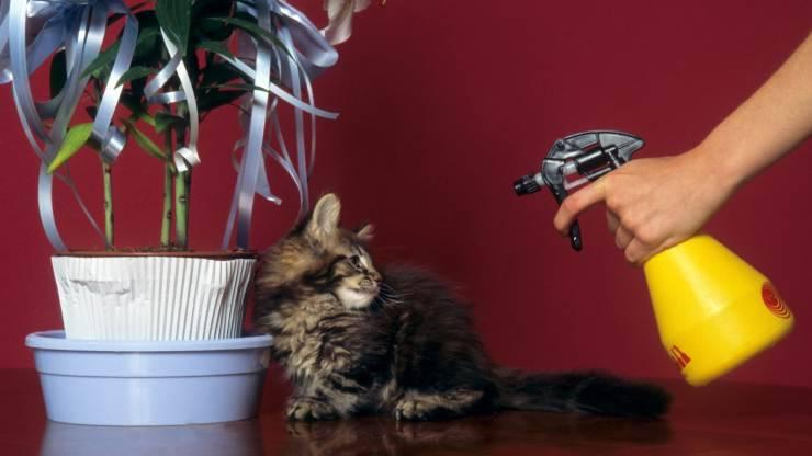spruzzare acqua al gatto
