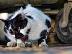 Il gatto e le stereotipie