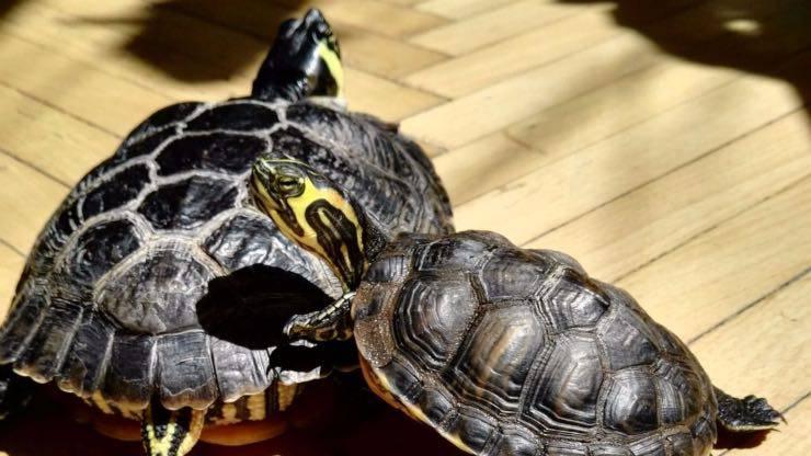 Vitamina D nella tartaruga