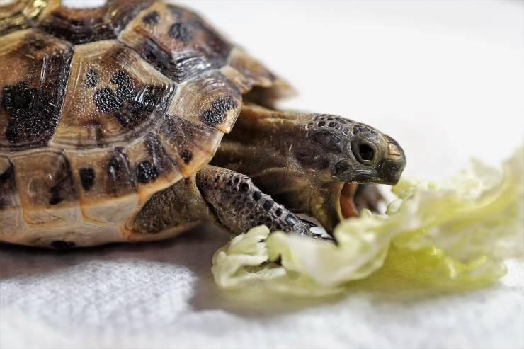 Il cibo giusto per la tartaruga d'acqua