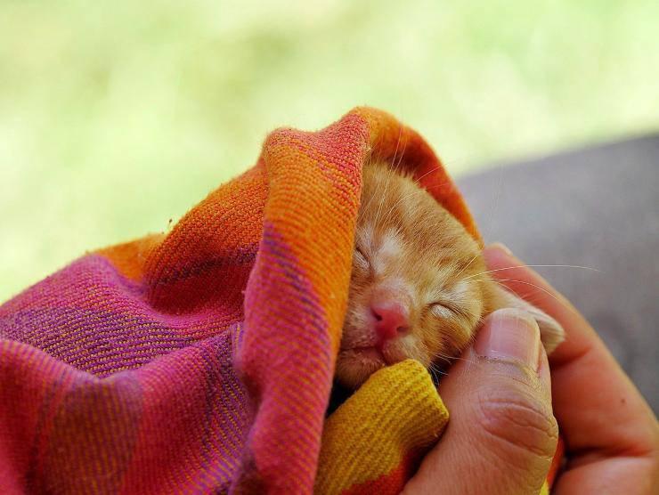 Gattino al caldo