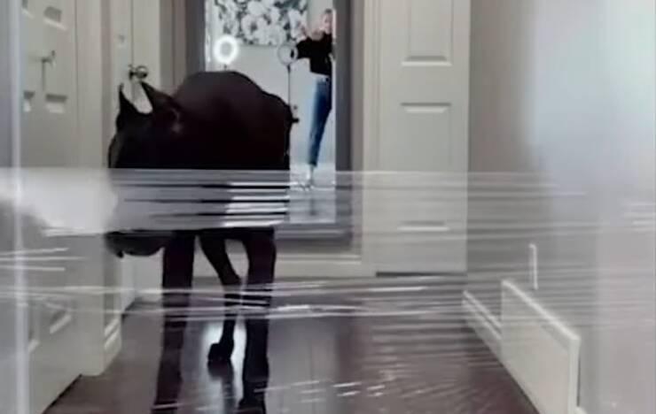 Zeus il cane a cui è stato fatto uno scherzo con la pellicola trasparente che ha divertito il we