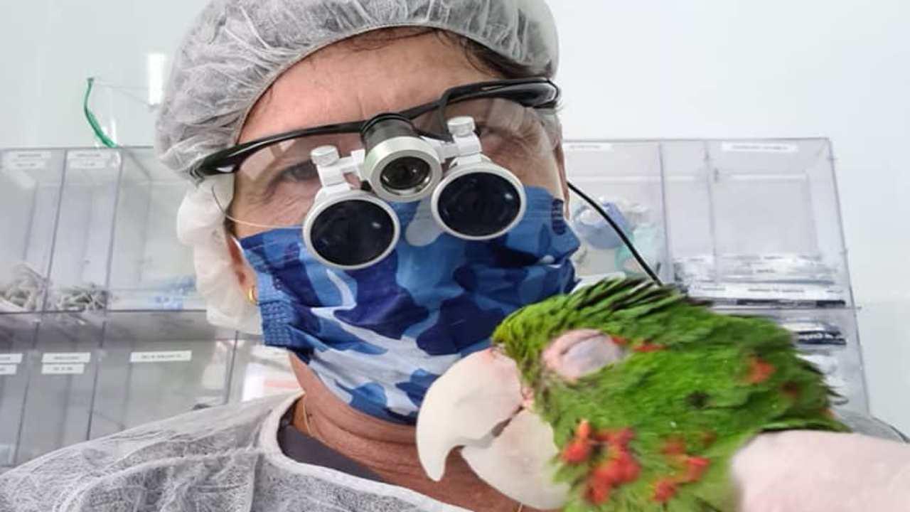Le cure per il pappagallo (Foto Facebook)