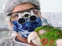Il medico e il pappagallo (Foto Facebook)