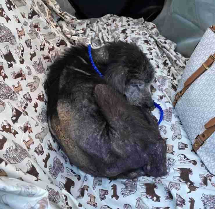 cane abbandonato riproduzione aspetta proprietari