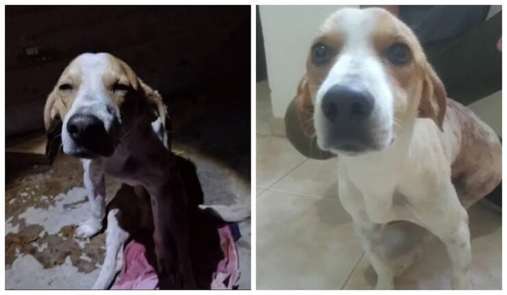 Fofinho il cane che è stato ferito con 4 coltellate per salvare la sua proprietaria (Foto Facebook)
