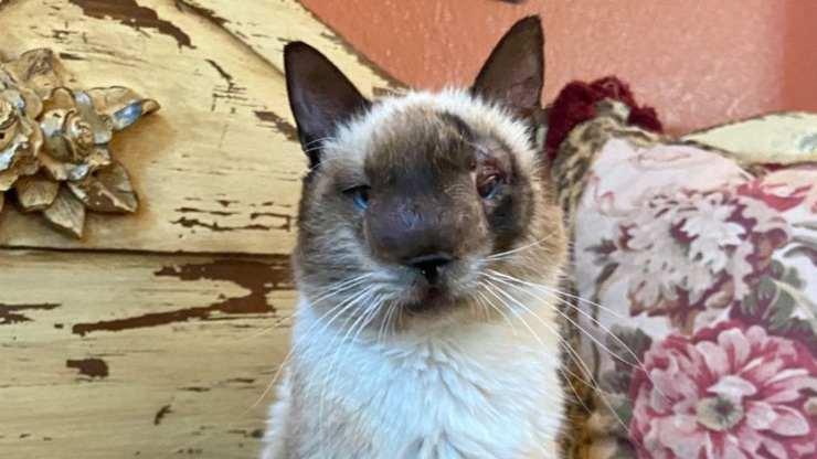 Gatto con il naso deformato (Foto Facebook)