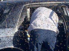 uomo trova 15 mila api auto