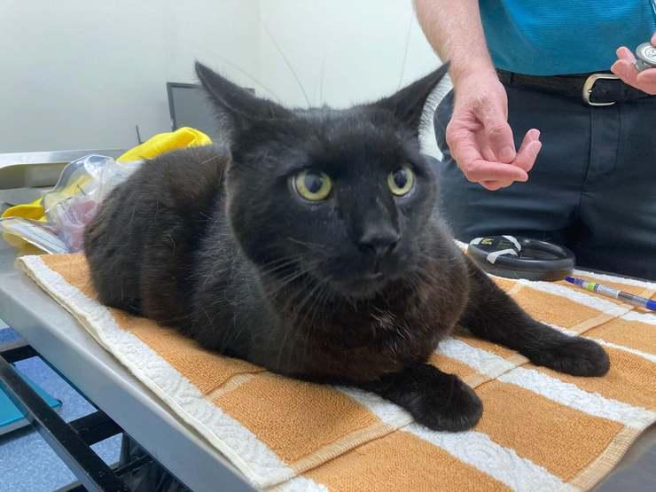 Gatto lasciato al sole rinchiuso in un bidone all'interno di una busta con del veleno per topi