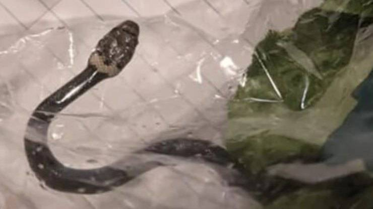Il serpente nella confezione (Foto Facebook)