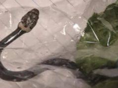 Il serpente nella lattuga (Foto Facebook)