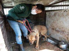 Uno dei cani salvati (Foto Facebook)