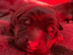 Uno degli undici cuccioli (Foto Facebook)