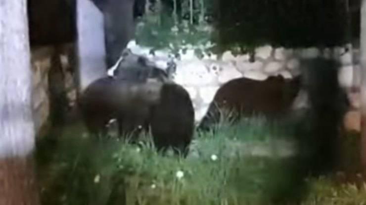 Gli orsi avvistati (Foto video)