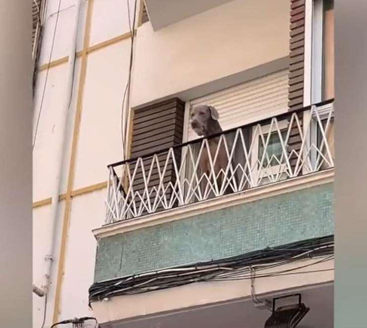 cane lancia pallina balcone passanti