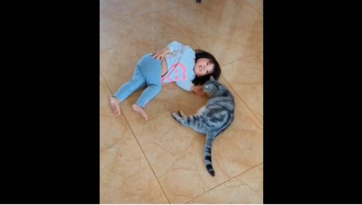gatto difende bambina video