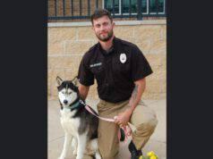 foto husky cane volontario