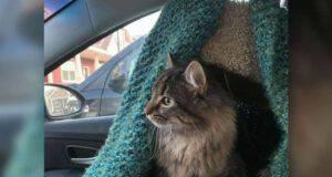 rubano auto gatto proprietario benzina