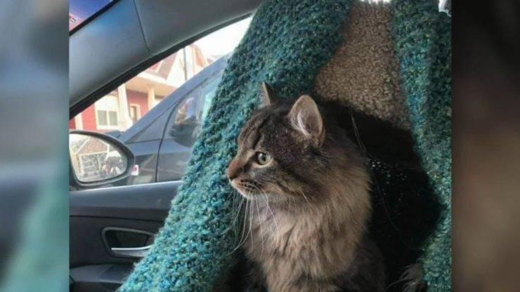 rubano gatto auto padrone benzina